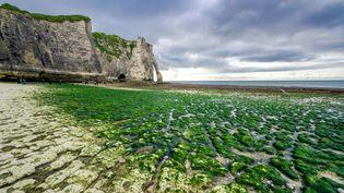 Etretat, en Normandie. Les algues ont pris possession des lieux. (Illustration) (MOMENT RF / GETTY IMAGES)