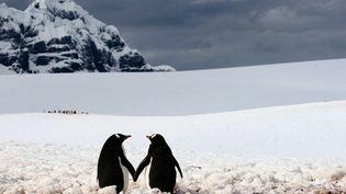 Il doit faire bien froid dans la péninsule Antarctique mais ce couple de manchots nous réchauffe le coeur. (SILVIU GHETIE / CATERS NEWS AGENCY / SIPA)
