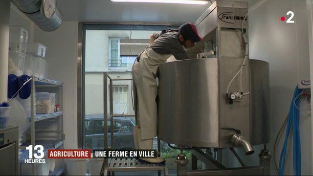 Agriculture : une laiterie artisanale en plein Paris