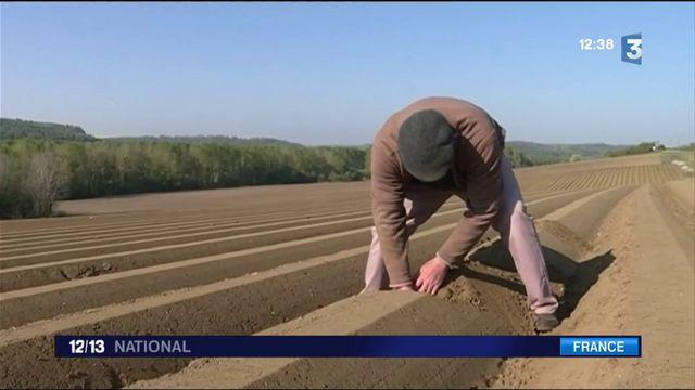 Sécheresse : les agriculteurs durement touchés