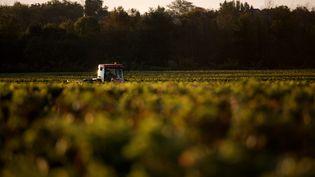 Des vignes dans le Médoc, en Gironde, le 24 octobre 2013. (MAXPPP)