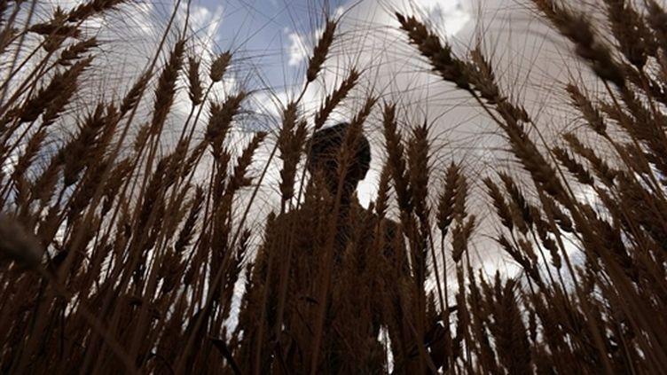 Un fermier afghan récolte son blé à Bamiyan en Afghanistan (AFP - Shah MARAI)