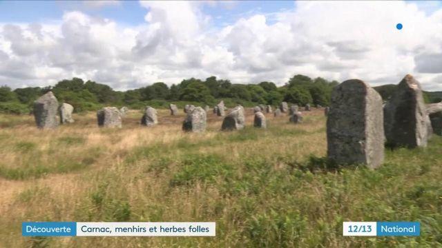 Morbihan : après le confinement, les herbes folles ont poussé entre les menhirs de Carnac