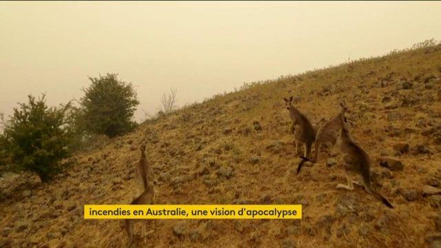L'Australie plus que jamais ravagée par les incendies