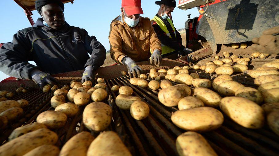 """Agriculture : """"Sur le mois de mars, il y a au moins 10000personnes à trouver pour travailler sur les exploitations"""", estime un entrepreneur du secteur"""