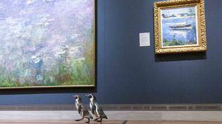 Deux manchots visitent le musée Nelson-Atkins de Kansas City, le 6 mai 2020, en temps de quarantaine dûe au Covid-19. (GABE HOPKINS / THE NELSON-ATKINS MUSEUM OF ART)