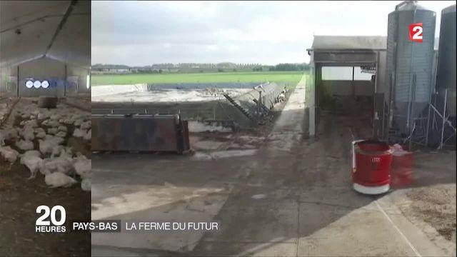 Pays-Bas : la ferme du futur