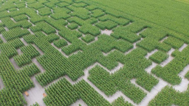 Un des labyrinthes de l'entreprise Pop Corn Labyrinthe, vu du ciel. (France 3 Rennes)