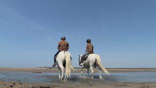À Sainte-Marie-de-la-Mer (Bouches-du-Rhône), les gardes forestiers sensibilisent à cheval au respect de l'environnement. Ils alertent également en cas de départ de feu. (CAPTURE ECRAN FRANCE 3)