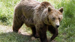 Une ourse se déplace dans le parc animalier des Angles (Pyrénées-Orientales), le 24 juin 2006. (GEORGES GOBET / AFP)