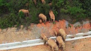 Chine : des éléphants se promènent en ville (France 2)