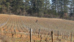 Un ouvrier agricole travaille dans une vigne du domaine Emmanuel Giboulot, cultivée en biodynamie, à Beaune (Côte-d'Or), le 12 février 2015. (BENOIT ZAGDOUN / FRANCETV INFO)