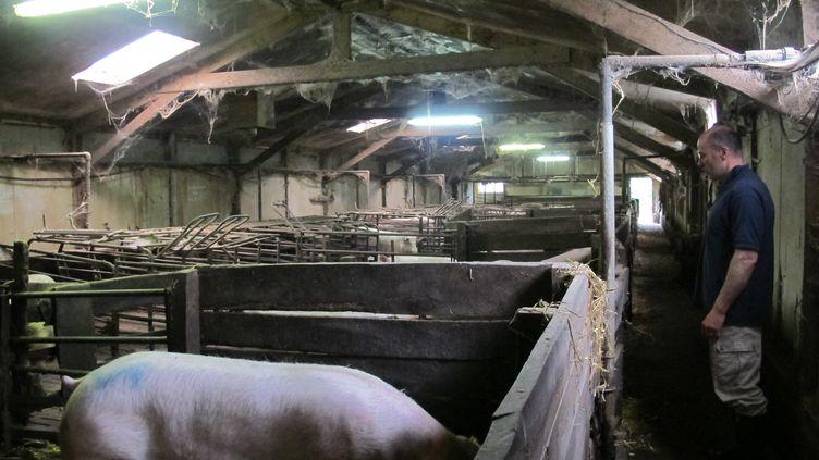 Dans l'élevage de porcs d'Emmanuel Rault, à Quintenic (Côtes-d'Armor), jeudi 11 juin 2015. (F. MAGNENOU / FRANCETV INFO)