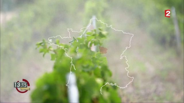 """VIDEO. """"13h15"""". Les zones viticoles en France consomment 20% des pesticides pour moins de 4% de la surface agricole"""