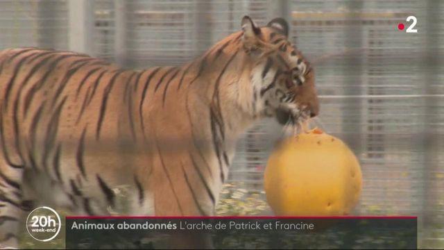 Eure-et-Loir : un couple recueille et soigne des animaux abandonnés