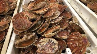 Lapêche à la Saint-Jacquess'annonce excellente en 2020 (photo d'illustration). (JEAN-BAPTISTE MARIE / FRANCE-BLEU BASSE-NORMANDIE)