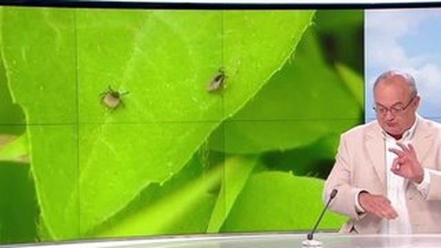 Les piqûres d'insectes, mal estival