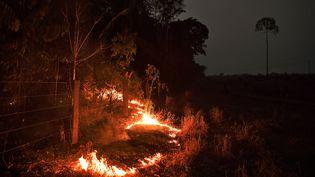 Un feu de forêt, près d'Abuna, au Brésil, le 24 août 2019. (CARL DE SOUZA / AFP)