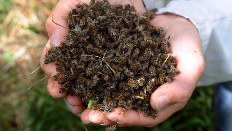 Un apiculteurramasse des abeilles mortes autour de ses ruches à Campbon, en Loire-Atlantique. (FRANK PERRY / AFP)