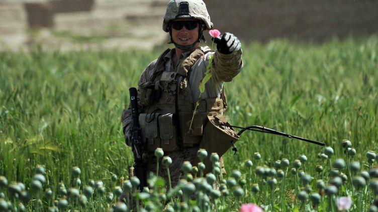 Un soldat américain dans un champ de pavot le 24 avril 2011 en Afghanistan. (BAY ISMOYO / AFP)