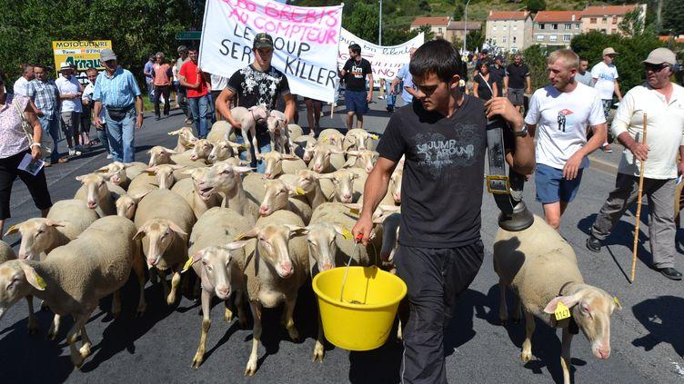 Des éleveurs manifestent pour exprimer leur refus du loup, vendredi 23 août 2013 à Langogne (Lozère). (JB LEDYS / MAXPPP)