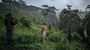 Une zone du parc de Kahuzi-Biega ravagée par un déboisement sauvage, inspectée par des rangers du parc le 30 septembre 2019. (ALEXIS HUGUET / AFP)