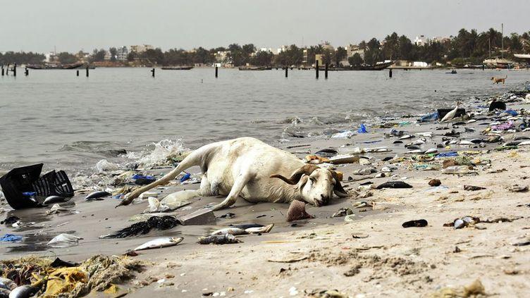 sur les rives de la baie de Hann, à Dakar, au Sénégal. Le constat est tellement alarmant sur l'état de la baie qu'un ambitieux projet de dépollution vient d'être mis sur pieds par l'Agence française de développement. La situation a atteint ce degré de pollution en raison, entre autres, du rejet direct d'effluents industriels et domestiques.60% de l'industrie manufacturière sénégalaise sont situés le long de la baie de Hann et y déversent directement leurs eaux polluées. Par ailleurs, des villages se sont développés à proximité, sans système d'évacuation des eaux usées, qui se déversent également dans la baie. (SEYLLOU / AFP)