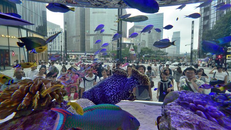 et qui contemple qui, de ces poissons ou de ces passants? C'est la question que l'on peut se poser devant cet immense aquarium disposé au Sony square (carrefour sony) à Tokyo. Une exposition estivale qui se tient dans la capitale nippone du 17 juillet au 28 août 2016. Le but est de familiariser les Japonais des îles du nord de l'archipel avec la faune maritime de l'île d'Okinawa au sud.   (KAZUHIRO NOGI / AFP)