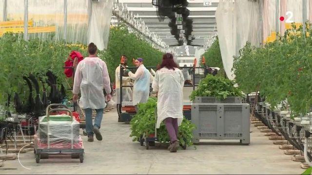 Environnement : l'hydroponie, l'agriculture autrement