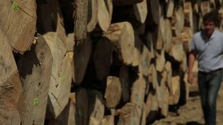 Bretagne : replanter des peupliers, une nécessité pour produire des cagettes (France 3)