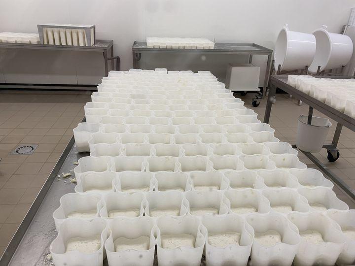 """Faute de pouvoir les écouler, les fromages s'accumulent dans la ferme """"Les Biquettes du Plantis"""", tenue par Véronique et Christophe Mercier. (Fanny Lechevestrier / RADIO FRANCE)"""
