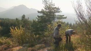 Le feuilleton du journal de 13 Heures est consacré cette semaine aux volcans d'Auvergne, avec aujourd'hui la rencontre de gardes du parc naturel. (FRANCE 2)