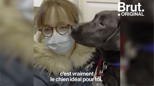 VIDEO. La rencontre entre Bérénice, malvoyante, et son chien guide (BRUT)
