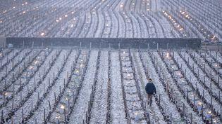 Pour tenter de protéger leurs vignes du gel, unviticulteur de Bourgogne allume des feux, le 7 avril 2021. (MICHEL JOLY / HANS LUCAS)