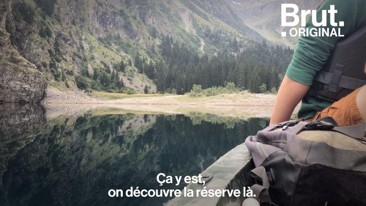 VIDEO. Immersion dans la mystérieuse réserve intégrale du Lauvitel (BRUT)