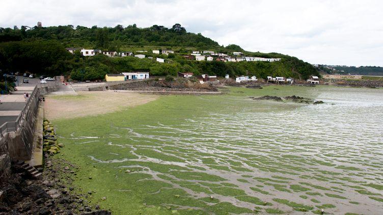 Les algues vertes ont fait leur retour sur les plages des Côtes d'Armor, comme ici à Saint-Brieuc, le 27 mai 2017. (MAXPPP)