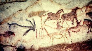 Sur le site périgourdin de Lascaux, 2.000 éléments peints ou gravés ont été identifiés, en majorité des chevaux, mais aussi des aurochs, cerfs, bouquetins, autant d'espèces animales qui ont fait la renommée mondiale de cette grotte, vieille de 18 000 ans.  (MAXPPP)