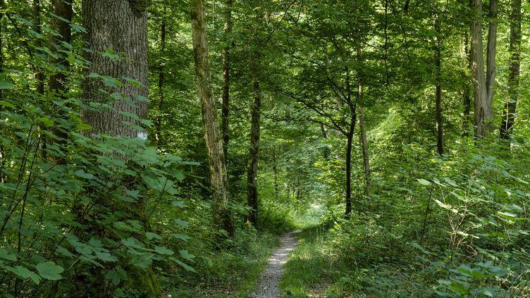 Forêt de Mormal, dans le parc naturel regional de l'Avesnois (Nord). (JEAN-MARC QUINET / MAXPPP)