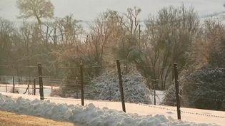 12 000 foyers étaient encore privés d'électricité vendredi 15 janvier au matin, à cause de la neige qui est tombée en abondance sur le nord-est du pays. (France 2)