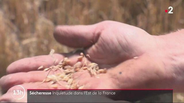 Sécheresse : inquiétude dans l'Est de la France