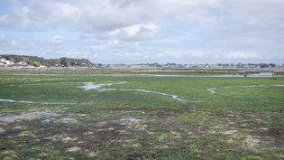 Des algues vertes devant l'île de Berder (Morbihan) à marée basse en mars 2021. (VALENTINO BELLONI / HANS LUCAS / AFP)