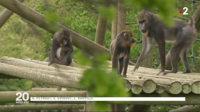 Espèces menacées : la captivité en question