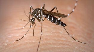 Le moustique tigre, Aedes Albopictus,est le vecteur du chikungunya. (CDC-GATHANY / PHANIE / AFP)