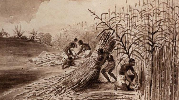 Esclaves travaillant dans un champ de canne. Gravure à l'encre de Chine (vers 1800), musée d'Aquitaine, cours Pasteur, Bordeaux. (AFP - MANUEL COHEN / MCOHEN)