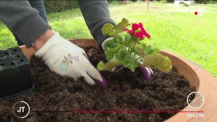 La saison de jardinage a commencé début mai (France 2)