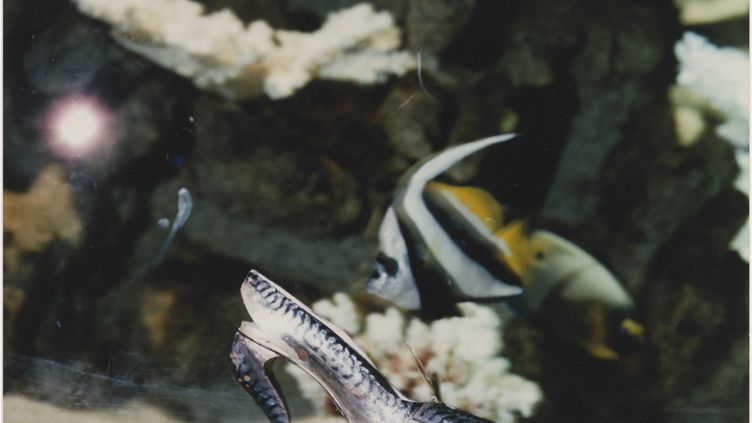 Soulier Maquereau, première création de Christian Louboutin en 1987, devant l'aquarium tropical du Palais de la Porte Dorée (1988). (CHRISTIAN LOUBOUTIN)