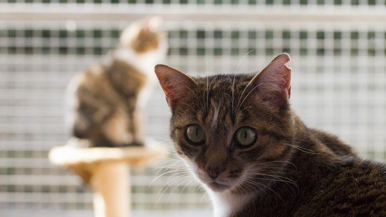 Près de 43 000 animaux ont été adoptés en 2019, un record historique, selon un communiqué de la Société protectrice des animaux (SPA), publié le 10 janvier 2020. (JACQUES LOIC / PHOTONONSTOP / AFP)