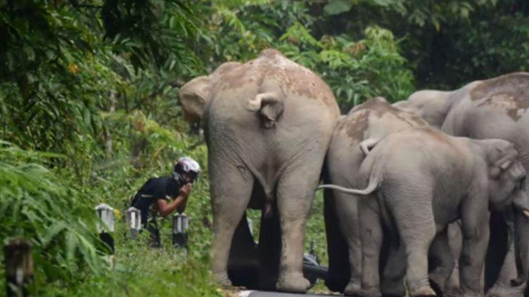 Un motard s'est fait chasser par des éléphants dimanche 18 octobre en Thaïlande. (KHAO YAI NEWS)