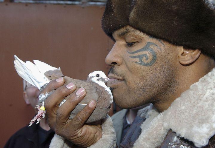 L'ancien boxeur Mike Tyson embrasse un pigeon lors d'une visite à Walsall, en Angleterre, le 18 novembre 2005. (GETTY IMAGES EUROPE)