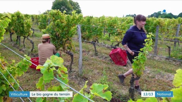 Agriculture : le vin bio se développe de plus en plus